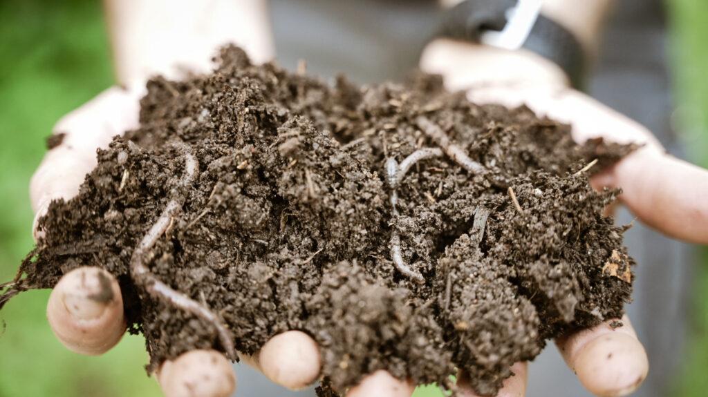 santé des sols LADV